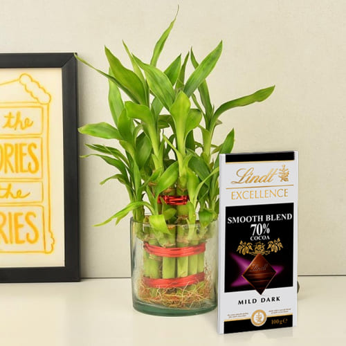 Buy 2 Tier Lucky Bamboo Plant with Lindt Excellence Chocolate