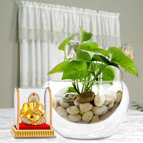 Deliver Gift of Lord Ganesha Idol with Money Plant in Glass Vase
