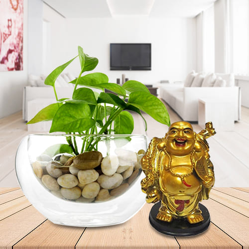 Buy Gift of Money Plant in Glass Vase with Laughing Buddha