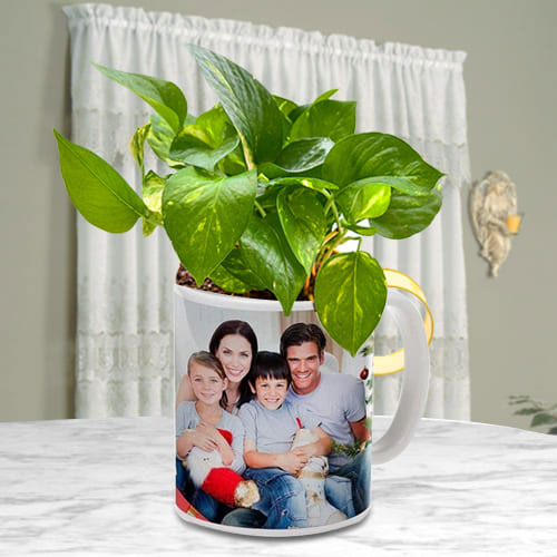 Enticing Moms Day Gift of Money Plant in Personalized Coffee Mug