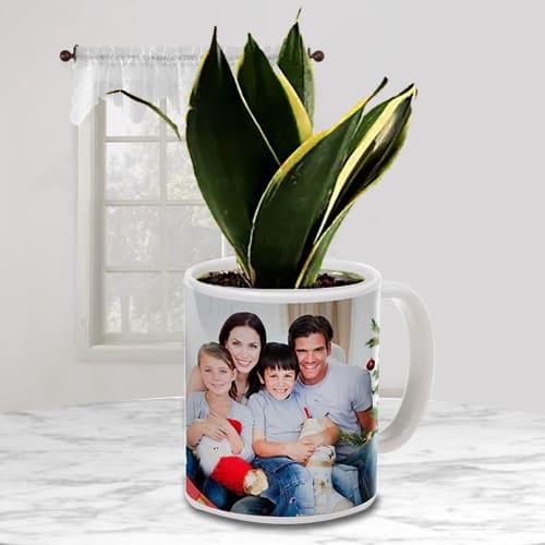 Nurturing Milt Sansevieria Air Purifying Plant in a Customized Mug
