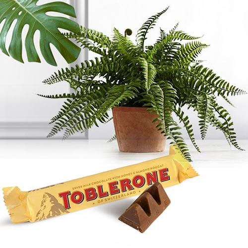 Healthy Gift Set of Bostern Fern Plant with Chocolate