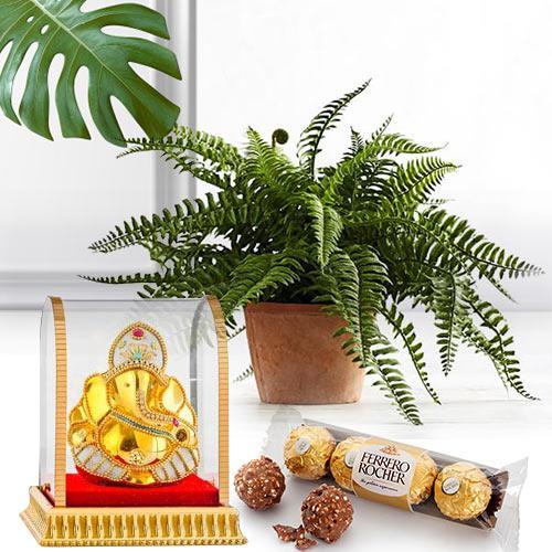 Festive Present of Bostern Fern with Chocolate N Vinayak Murti