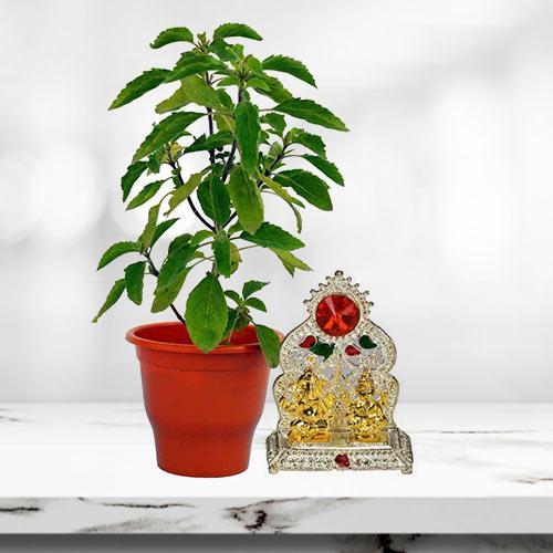 Graceful Arrangement of Holy Tulsi Plant with Laxmi Ganesh Mandap