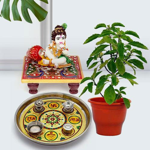 Devotional Puja Gift with Holy Tulsi Plant for Religious Mother