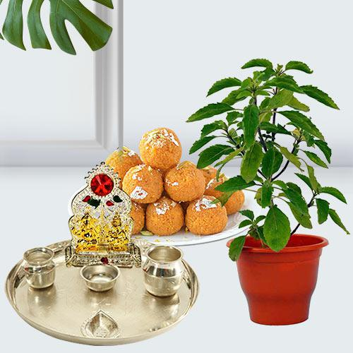 Festive Special Gift Hamper with Potted Tulsi Plant