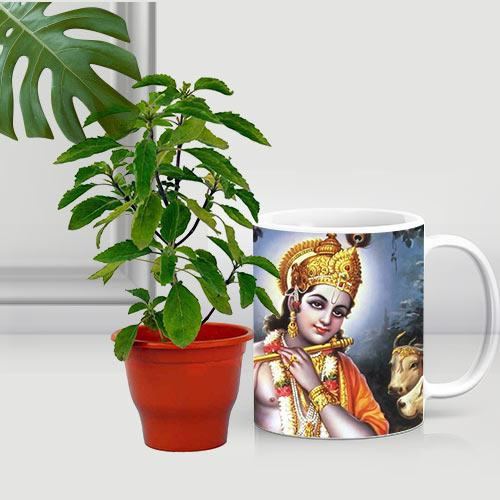 Premium Gift of Holy Tulsi Plant in a Coffee Mug