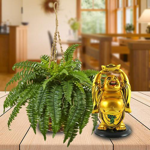Decorative Hanging Bostern Fern Plant with Laughing Buddha