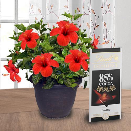 Hue of Green Hibiscus Flower Pot N Chocolate Duo