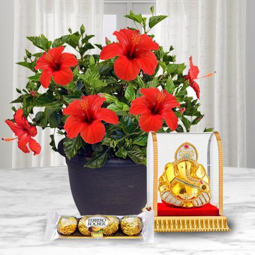 Flowering Hibiscus Plant with Ganesh Idol N Chocolate