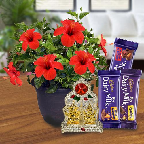 Exquisite Gift of Hibiscus Plant Pot with Mandap N Chocolate Pack