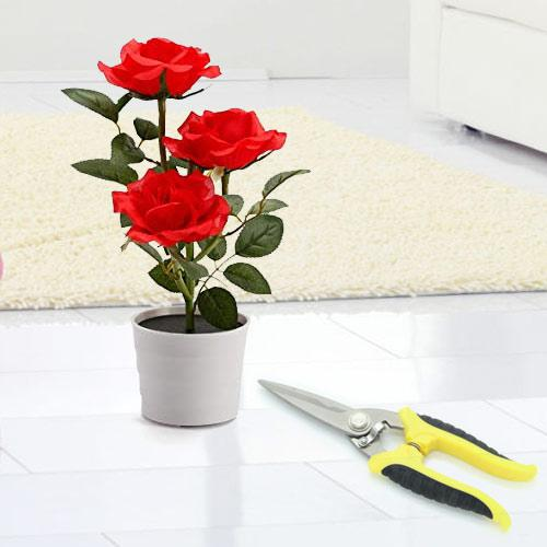 Blossom-Filled Red Rose Planter N Pruning Scissor Dual Gift