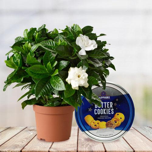 Vibrant Selection of Jasmine Plant with Cookies