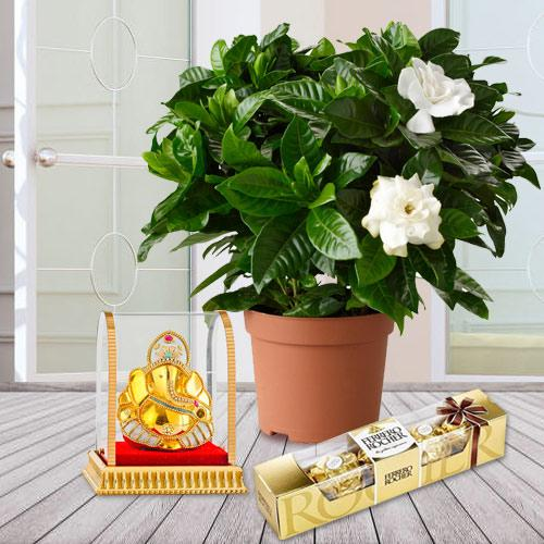 Flowering Jasmine Plant with Chocolates N Ganesh Murti