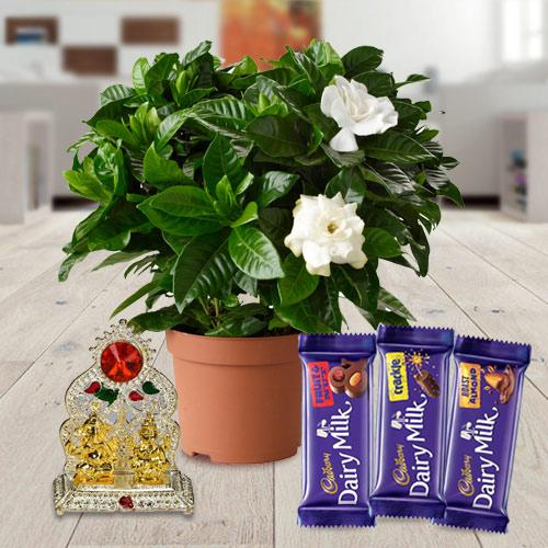 Golden Plant Gift Hamper with Sweet Assortments