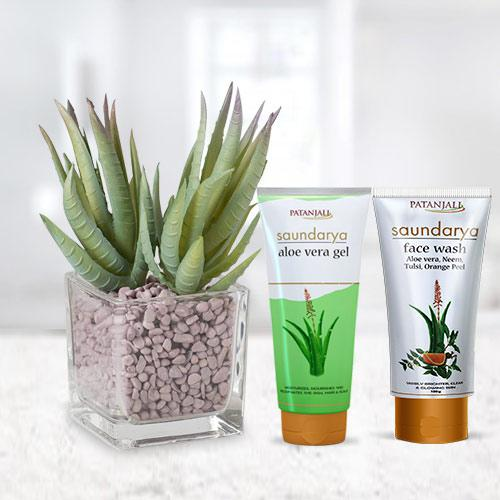 Fast-Growing Aloe Vera Plant with Beauty Care Hamper