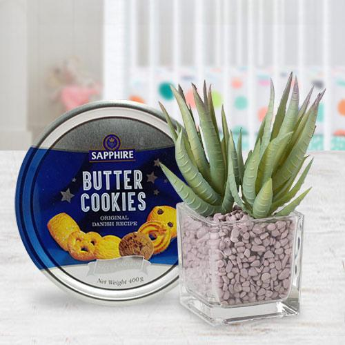 Evergreen Gift of Aloe Vera Plant with Cookies