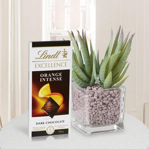 Delicate Combo of Aloe Vera Plant with Chocolate Bar