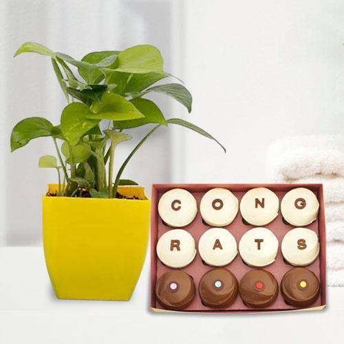 Assorted Congrats Handmade Chocolates with Money Plant