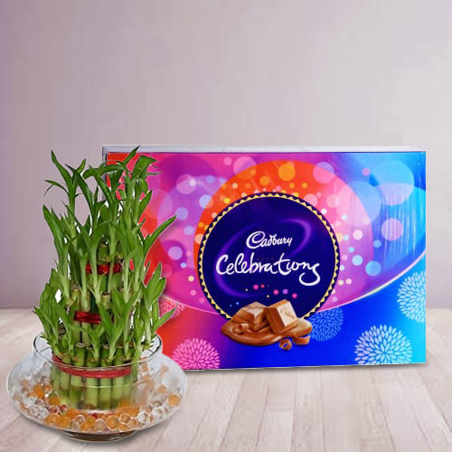 Buy 2 Tier Lucky Bamboo Plant with Cadbury Celebrations Pack