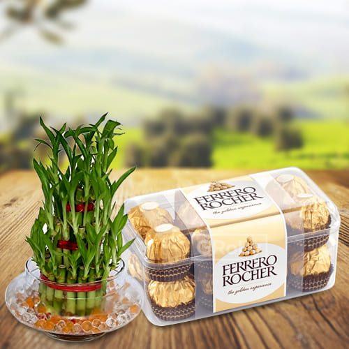 Buy Two Tier Lucky Bamboo Plant with Ferrero Rocher Chocolates
