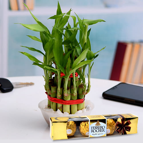 Deliver Two Tier Lucky Bamboo Plant with Ferrero Rocher Chocolates Pack