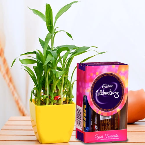 Buy 2 Tier Lucky Bamboo Plant with Cadbury Celebrations Mini Pack