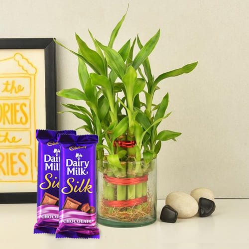 Buy 2 Tier Bamboo Plant with Cadbury Dairy Milk Silk Chocolates