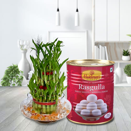 Buy 2 Tier Lucky Bamboo Plant with Haldirams Rasgulla