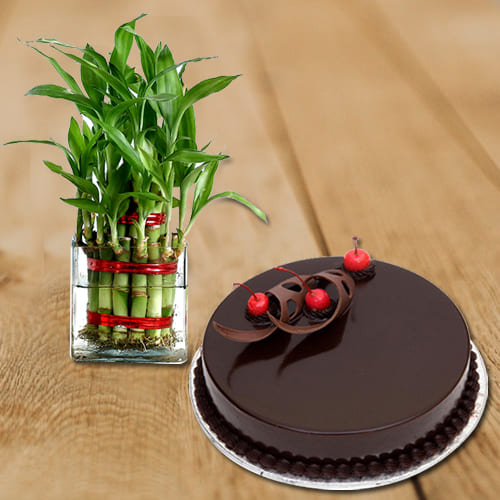 Captivating Happy Birthday Present of 2 Tier Lucky Bamboo Plant in Glass Pot with Chocolate Cake
