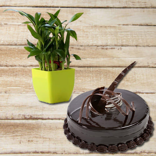 Buy 2 Tier Lucky Bamboo Plant with Chocolate Truffle Cake