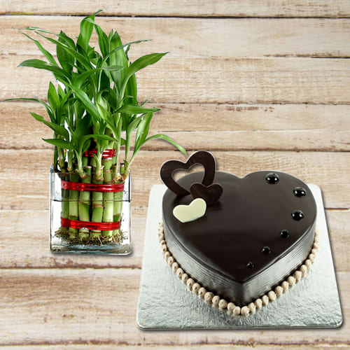 Send 2 Tier Lucky Bamboo Plant with Chocolate Heart Shaped Cake