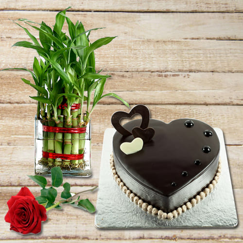 Buy Chocolate Cake with Red Rose N 2 Tier Lucky Bamboo Plant