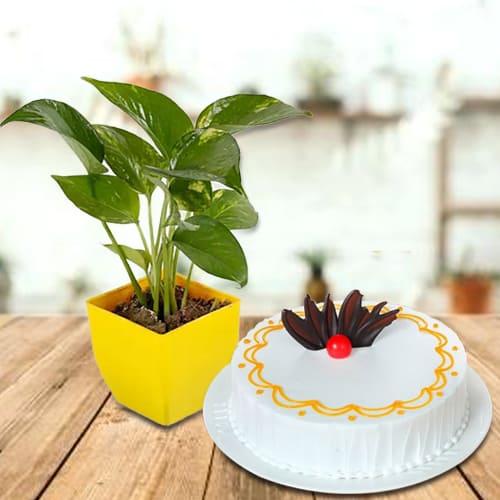 Deliver Vanilla Cake with Money Plant in Plastic Pot