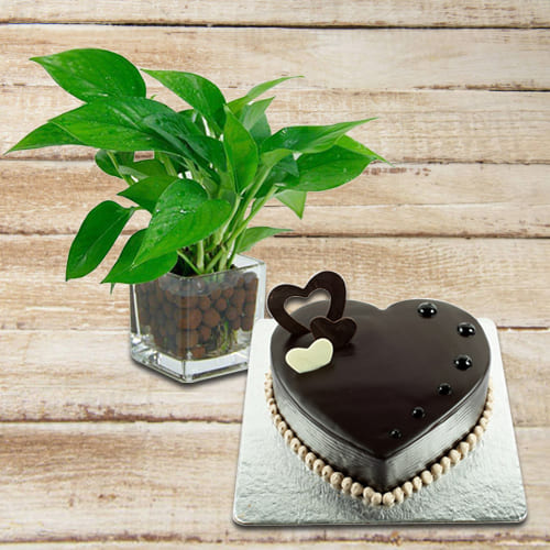 Buy Chocolate Cake with Money Plant in Glass Pot
