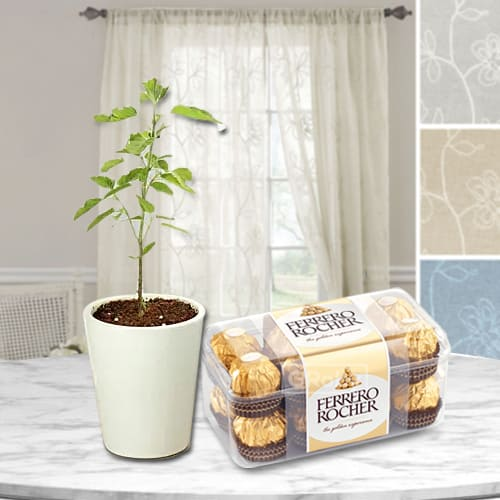 Shop for Ferrero Rocher Chocolates Box with Tulsi Plant in Glass Pot