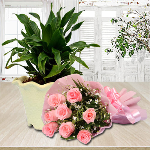 Online Pink Rose Bouquet with Dracaena Compacta Plant in Plastic Pot