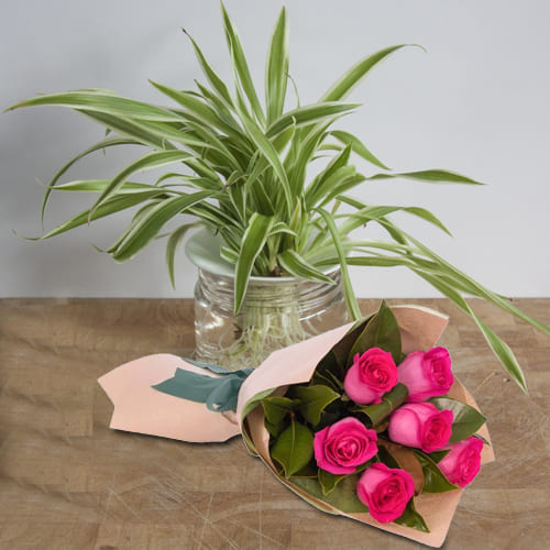 Online Spider Plant in Glass Pot with Bunch of Pink Roses