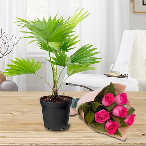 Online Gift of China Palm in Plastic Pot with Bouquet of Pink Roses