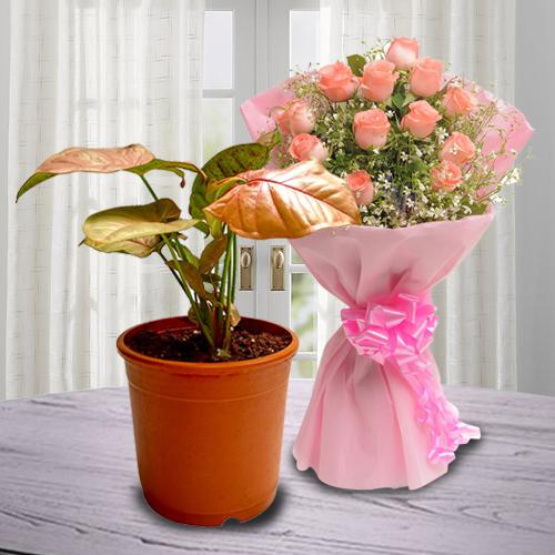 Delightful Set of Air Cleaning Planter N Pink Rose Arrangement