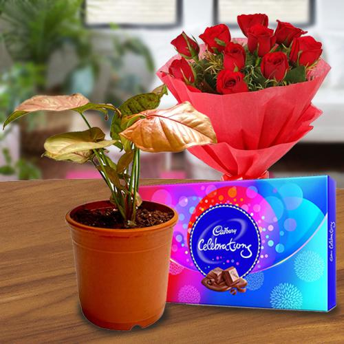 Graceful Air Purifying Plant with Roses Bouquet N Chocolates