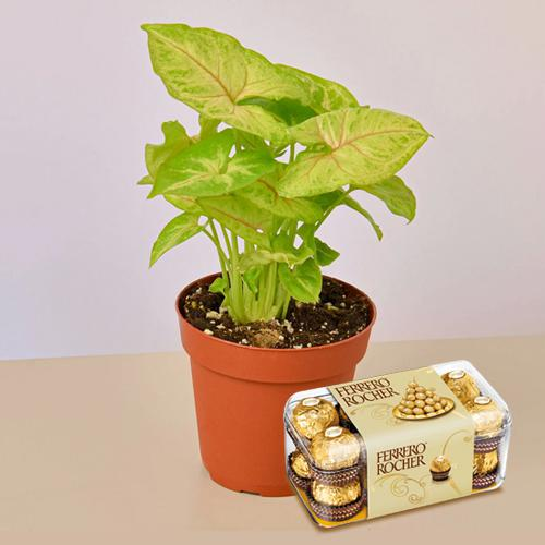 Breathtaking Air Cleaning Indoor Plants with Chocolate Box