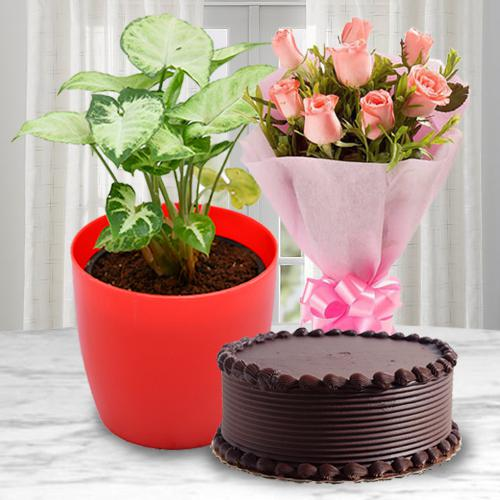 Classic Present of Syngonium Plant with Rose Bouquet N Cake