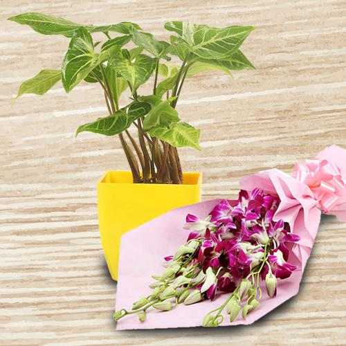 Colorful Composition of Orchids Bouquet with Syngonium Indoor Plant
