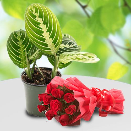 Eye-Catching Gift of Maranta Prayer Plant with Red Rose Arrangement