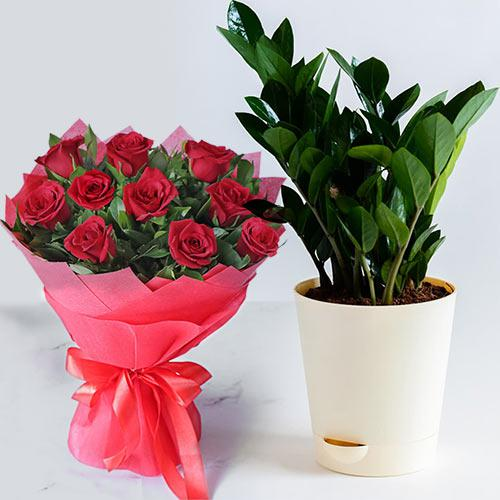 Charming Arrangement of Red Color Roses with Zamia Plant