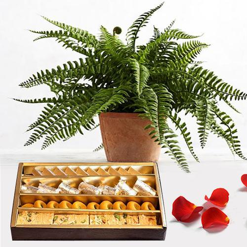 Classic Arrangement of Bostern Fern with Assorted Sweets