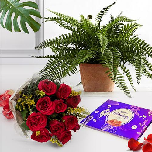 Splendid Combo of Indoor Plant with Chocolate N Rose Bunch