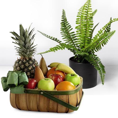 Fantastic Gift of Bostern Fern Indoor Plant N Fruits Basket