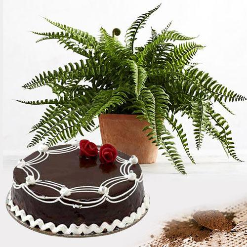 Special Combo of Bostern Fern Plant with Chocolate Cake